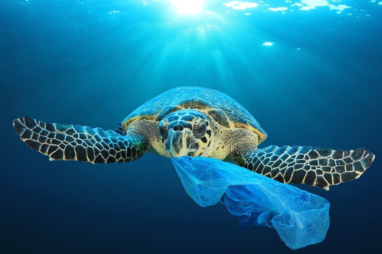 Plastic Pollution And Its Effects On The Marine Ecosystem