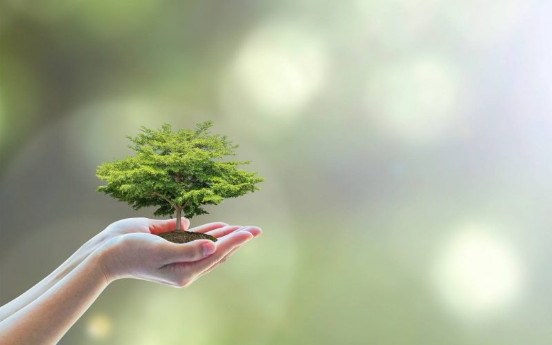 The Importance Of Staying Eco Friendly