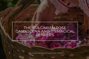 The Bulgarian Rose Damascena And Its Magical Benefits